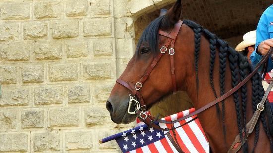 Journée du cheval 09092018 Fort de Condé (6)